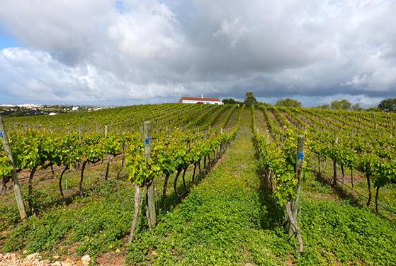 FET_Liebhaverboligen_Rejsereportage_Algarve_Cliff Richards vingård ligger smukt i landskabet
