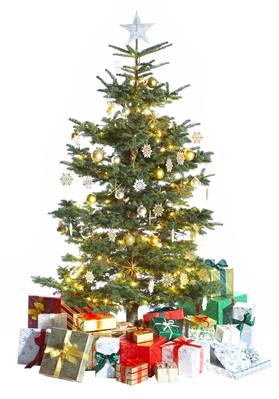 hvilket juletræ holder længst