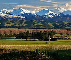 CAT_NewZealandsk_vin_Mt-Beautiful-Wines_NORTH-CANTERBURY