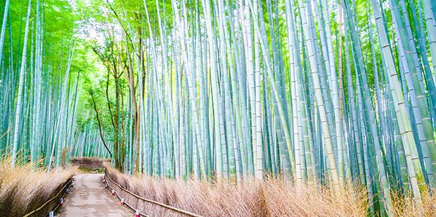 Bambus boom  i boligen