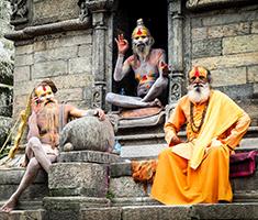 CAT_Nepal_fares-nimri-361821-unsplash