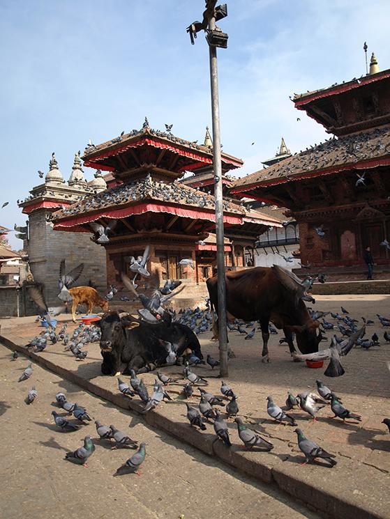 FET_Nepal_der-er-plads-til-'alle'-i-Katmandus-bybillede