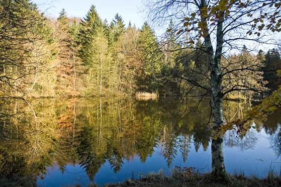 FET_Tolnne_Skov_Lake_da_081101_Jørgen-Larsen