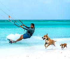 CAT_Rejsereportage_aruba