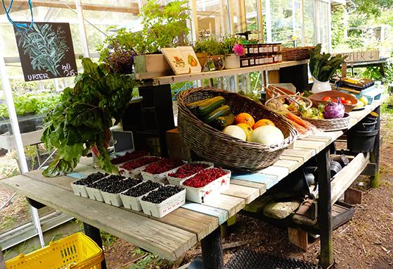 FET_Anholt_Et-besøg-på-Anholt-Gartneri-er-en-fin-oplevelse.-Gårdbutikken-sæger-både-grøntsager-og-kunsthårdværk