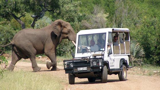 safari copy