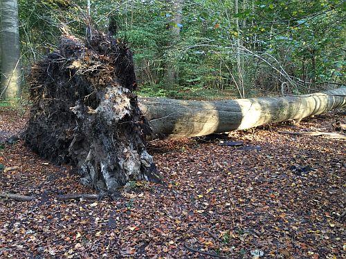 sundhed natur træ web
