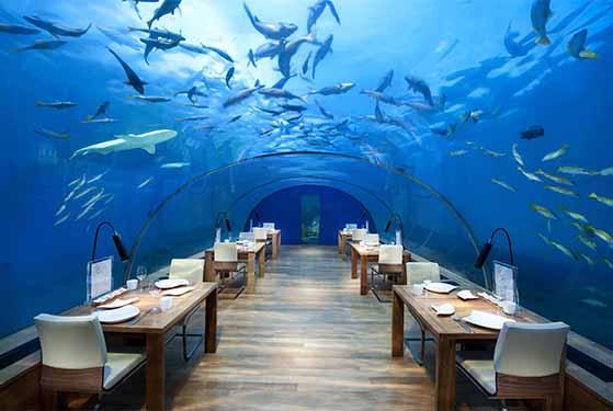 FET_Restauranter_Spiseliv_Dyrerestauranter_Ithaa Undersea Restaurant