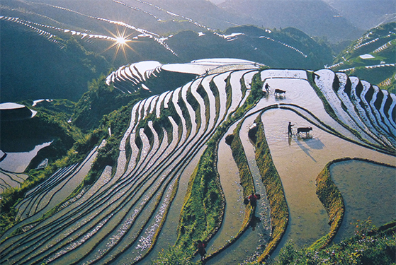 FET_Rejsereportage_Kina_TRis-terrasser om foråret