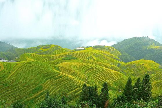FET_Rejsereportage_Kina_Tristerasser i morgendis