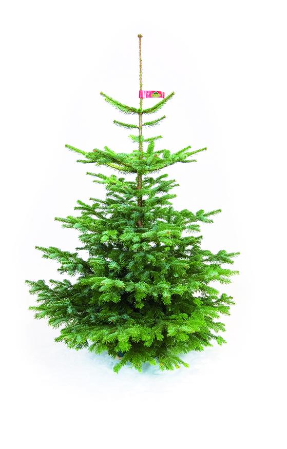 FET_Juletræer_Nr. 2