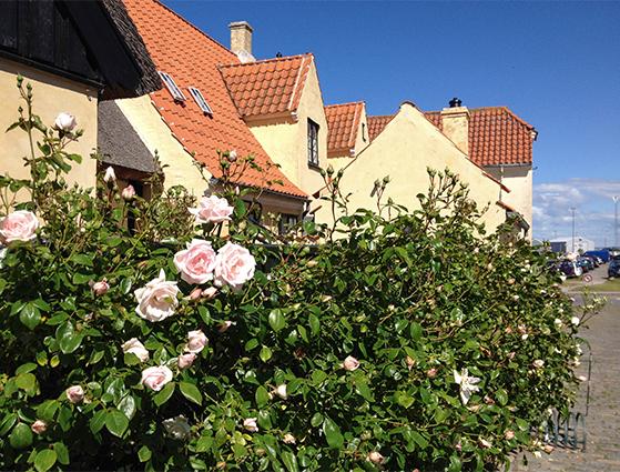 FET_Dragør_gamle by (2)