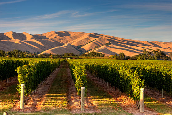FET_NewZealandsk_vin_Giesen-Wines_Marlborough