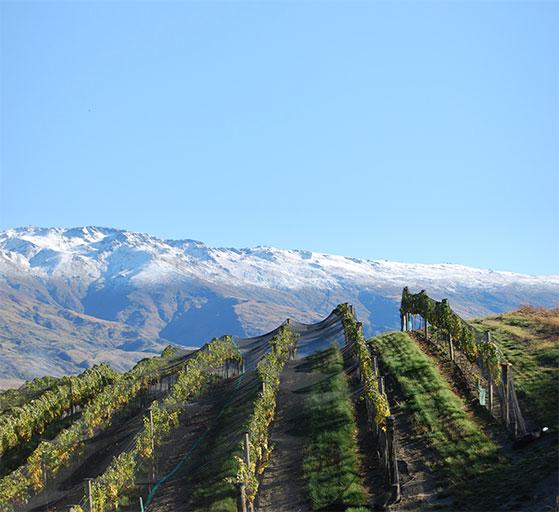 FET_NewZealandsk_vin_Mishas-Vineyard_Central-Otago