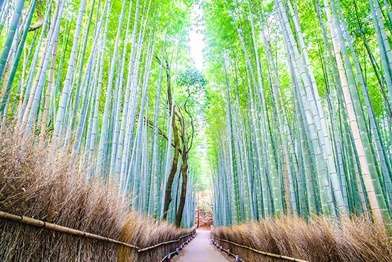 FET_Bambus