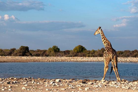 FET_Regitses_Rejseunivers_namibia