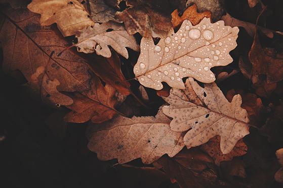 FET_abstract-autumn-autumn-colours-688830