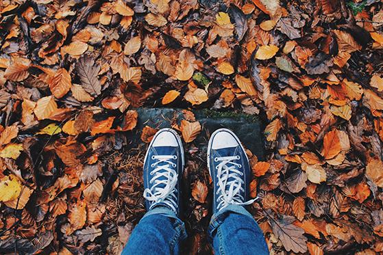 FET_autumn-close-up-color-267313