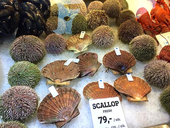 FET_På-de-oversækkede-fisketorv-kan-alt-i-fisk-fås.-her-søpindsvin-som-er-en-delikatesse,-der-spise-rå....-Foto--Eva-Baré