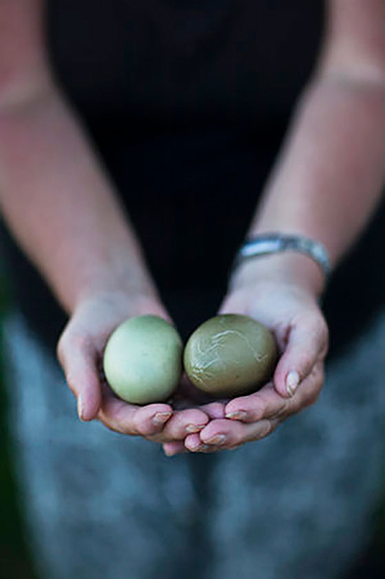 FET_Edderfuglenes-æg-er-smukke